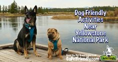 Dog friendly activities near Yellowstone National Park from the Pet Travel Experts at GoPetFriendly.com