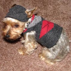How-To: Make a Dog Sweater from a Sock.  Sooooo cute for such a tiny dog