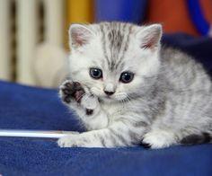 Katze mit weißem Fell