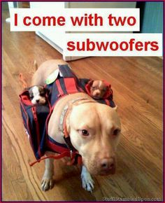 Subwoofers!! find these babies at http://www.ds18sound.com