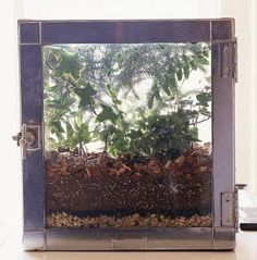 Plant a Beautiful Terrarium | Midwest Living