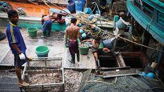 Nô lệ có thể đang đánh bắt những con cá bạn đang ăn