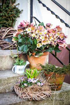 Blomsterverkstad: På min trappa