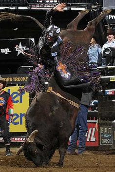 Asteroid and J. B. Mauney.  Look at this!  Asteroid is nearly standing on his head!!!  (pbr.com)