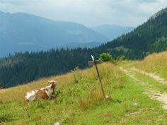 The green pastures of Rugova mountains in Kosovo © Franco Pecchio / CC BY-SA 2.0
