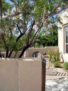 Abq West Mesa residence - front courtyard, Desert Willow, Cow's Tongue Prickly Pear (QUERCUS, 1998)
