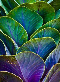 leafy greens / #MIZUstyle