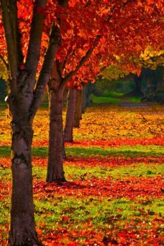 Thanks for visiting Beautiful Mother Nature. Sometimes people put up walls, not to keep others out, but to see who cares enough to break them down Beautiful World, Beautiful Places, Autumn Scenes, Fall Pictures, Fall Pics, Autumn Day, Autumn Leaves, Fall Trees, Fall Season