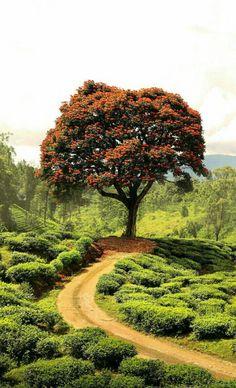 Do want a tree? Beautiful Roads, Beautiful World, Beautiful Places, Beautiful Nature Wallpaper, Beautiful Landscapes, Landscape Photography, Nature Photography, Nature Tree, Art Nature