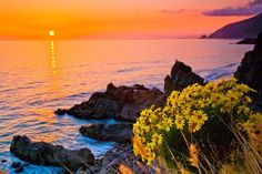 Giant Coreopsis Sunset, Sycamore Cove, Pt. Mugu State Park, California