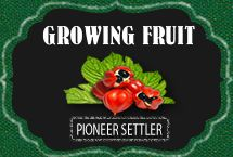 Growing fruit at pioneersettler.com
