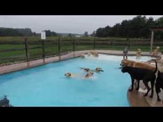 Wagging tails, wet fur, and a barking good time: a puppy pool party like no other! - Lost At E Minor: For creative people