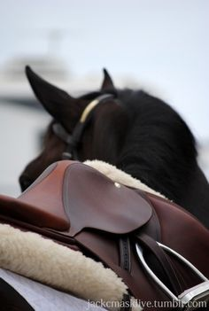 brand new saddle.