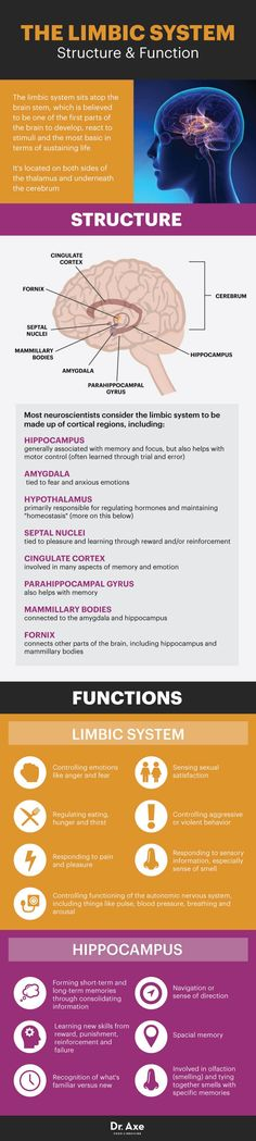 Limbic system structure and functions - Dr. Axe http://www.DrAxe.com #health #holistic #natural