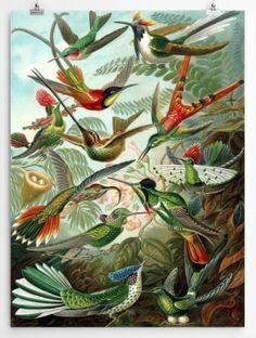 These vintage framed prints are sensational and will make a statement wherever you place them. Order online at nancydesigns.co.za #vintage #decor #vintagedecor #artprints #wallart #homedecor #interior #interiordecor #art #birdart #floralart Ernst Haeckel Art, Natural Form Art, Science Illustration, Paint By Number Kits, Vintage Art Prints, Vintage Decor, Paint Set, Gustav Klimt, Conte