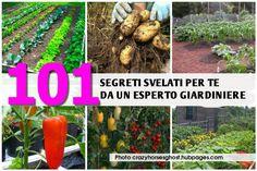 Amate curare piante e giardino ma spesso incorrete in inconvenienti che non sapete esattamente come risolvere? Di seguito un po' di interessanti trucchi ut