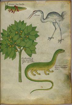 Miniature of a plant, a cricket, a crane, and a salamander - (Tractatus de Herbis - Sloane 4016   f. 42) by peacay, via Flickr