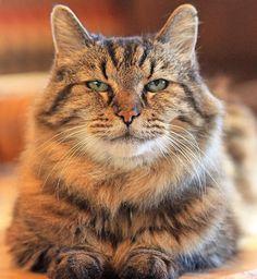 Corduroy, o gato mais velho do mundo