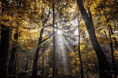 Der Herbst ist da und auch die Zeit, in der Nebel wieder die morgendliche Landschaft flutet. Dieses Naturspektakel mag ich am Herbst am Liebsten, gerade wenn sich die Bäume verfärbt haben. So ein Herbstwald im Nebel kann unterschiedlicher nicht sein.