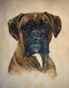 Boxer head study - original oil dog painting, painting by artist Anne Zoutsos