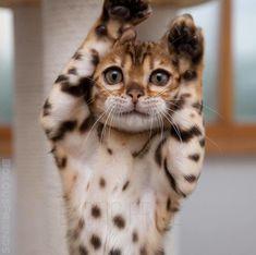 Oh , my ears !!