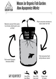 How aquaponics works, example with Mason Jar Aquaponics. Grow your indoor organic herb garden/ salad greens with this desktop hydroponics system. #greenplur