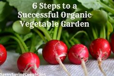 6 Steps to a Successful Organic Vegetable Garden