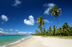 Things to do in Nevis and St. Kitts