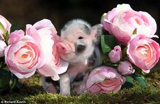 flowers and animals - Buscar con Google