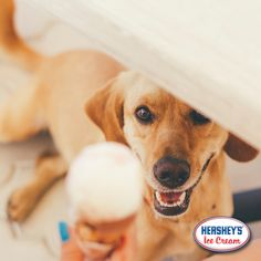 Looks like you aren't the only one who has been eyeing Hershey's® Ice Cream! #RememberToShare #IceCreamLover #HersheysIceCream