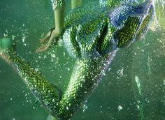 iridescence.. Alexander McQueen 'Atlantis' .