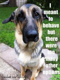 Wicked Training Your German Shepherd Dog Ideas. Mind Blowing Training Your German Shepherd Dog Ideas. Funny Dog Memes, Funny Dogs, Cute Dogs, Funny Animal Pictures, Funny Animals, Positive Dog Training, Easiest Dogs To Train, Schaefer, Dog Activities