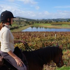 Horse riding before wine tasting Adventure Tours, Adventure Travel, Travel Activities, Horse Riding, Wine Tasting, Touring, South Africa, Horses, Explore
