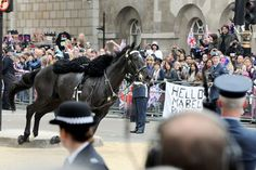 A horse is seen running past spectators outside the Royal Wedding of The Duke and Duchess of Cambridge.