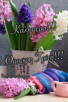Good Morning, Mornings, Buen Dia, Bonjour, Acre, Good Morning Wishes
