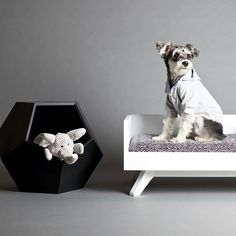 Check out our friends at  @pupandkit another great dog company based out of Toronto! -  Pet cave works as a cat or dog bed side table toy bin and so much more! All caves are handmade in Toronto. #dog #dogbed #doglover #pethood #petdesign #petstagram #pethood #dogoftheday #houndsbazaar #mannysbuddyoftheweek #design #homedecor #dogsofinstagram #love #instagood #puppy #moderndog #dogmilk #dogsofinstaworld #minischnauzer #dogoftheday #schnauzer #dogsofinstaworld #dogandpals #design #homedecor…