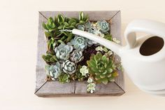 Love unique garden planters? Create one that puts your succulent collection on display with this project.
