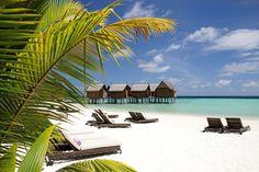Constance Moofushi, South Ari Atoll, Maledives Ja Palm Tree Court, Maldives Luxury Resorts, Maldives Travel, All Inclusive Resorts, Hotel Services, Honeymoon Destinations, Holiday Destinations, Honeymoon Ideas, Maldives Islands