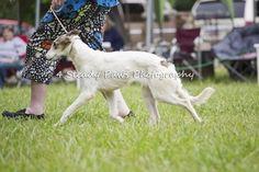 Smooches on the move East Coast, Photography, Animals, Photograph, Animales, Animaux, Fotografie, Photoshoot, Animal