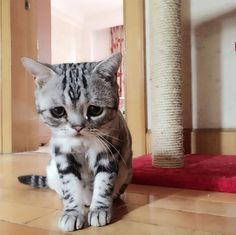 The Saddest Kitten Of The Internet Will Melt Your Heart...The next time you have a rough day, just be sure to scroll through some pictures of Luhu, the saddest, cutest cat on the internet. Looking at her adorable snap shots is proven to make your day ten times better!