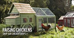 Backyard chicken farming is becoming popular, even Williams-Sonoma is pushing the idea! ... give it a try!