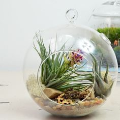 Large Air Plant Terrarium// Natural