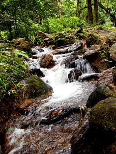 It is believed that people can wash out their sins by immersing themselves in the water. Wayanad resort.