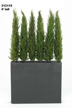 Image result for tall terrace plants