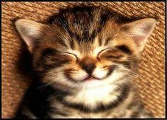 Smiling Animals  #Loveit
