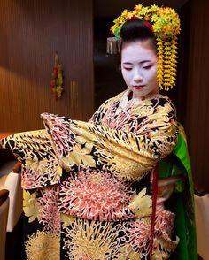 November 2016: Maiko Koeri (Hiroshimaya Okiya) of Gion Kobu wearing an absolutely gorgeous kimono with a chrysanthemum-motif on it. Source: Kinmokusei on Instagram