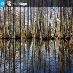 Reflections on the waterways in Cheraw State Park