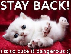 Funny, Cute, Angry Cat Memes Collection for Friends, Family