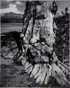 Ansel Easton Adams (American, 1902–1984) Tuolumne Meadows, Yosemite National Park, California 1941 Gelatin silver print