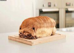 Pugs are high in fiber.